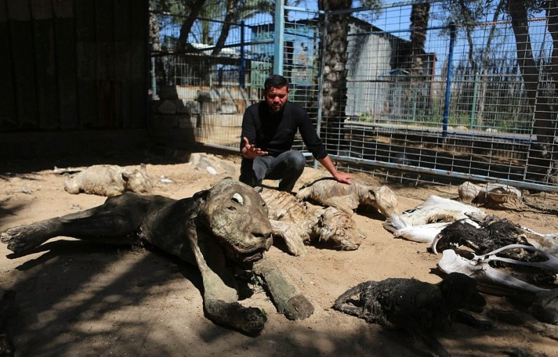 This Zoo Quickly Turns Into A Nightmare When The Guards See This - 8