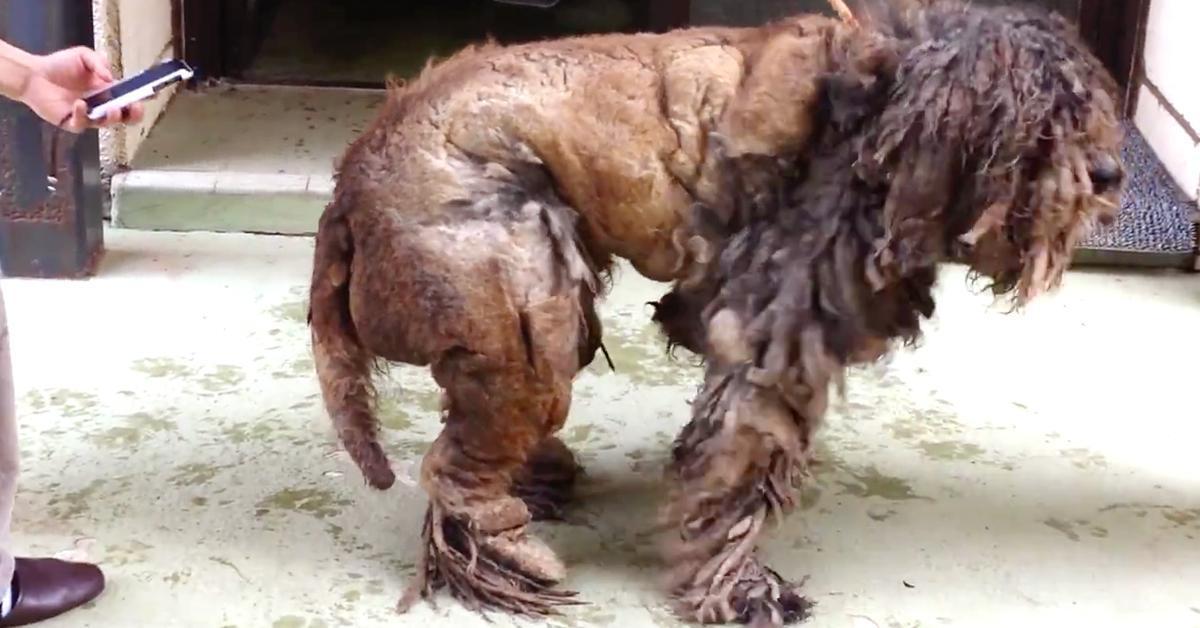 Race Car Place >> Un chien avec des dreadlocks à la place des poils se fait toiletter