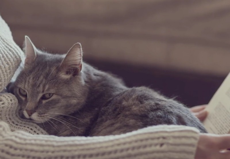 Des scientifiques recommandent de toujours amener son chat avec soi dans le lit. Vous serez surpris de voir les raisons. - 4
