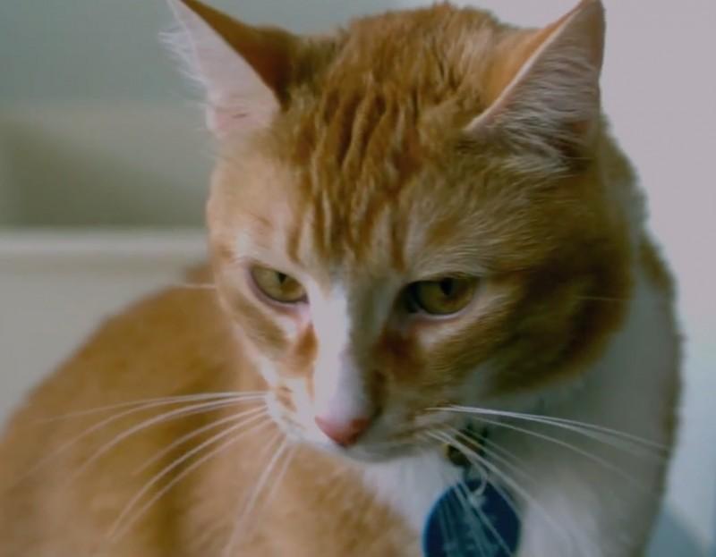Des scientifiques recommandent de toujours amener son chat avec soi dans le lit. Vous serez surpris de voir les raisons. - 2