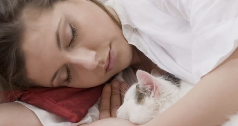 Des scientifiques recommandent de toujours amener son chat avec soi dans le lit. Vous serez surpris de voir les raisons. - 8