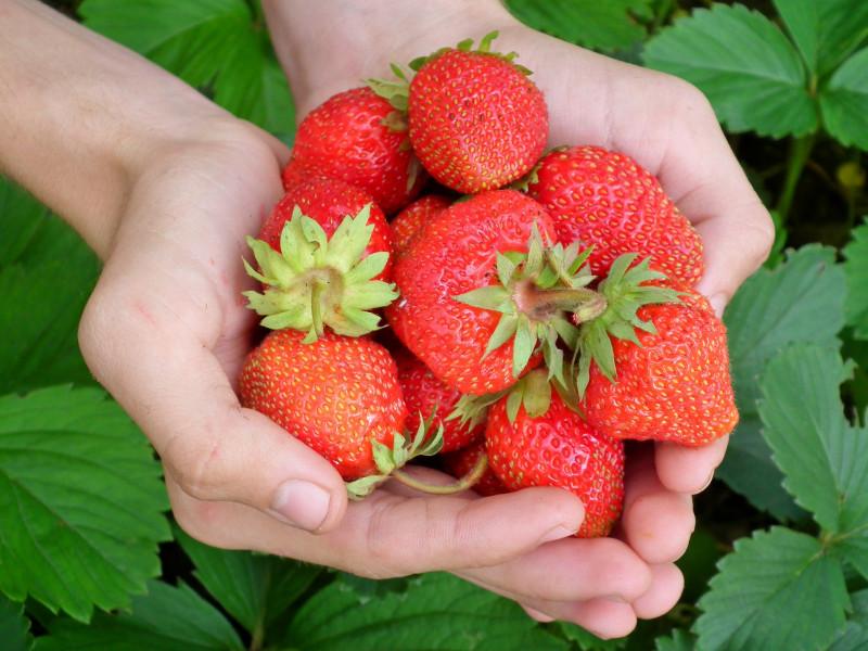 Santé: Voici ces aliments que vous devez consommer sans modération!