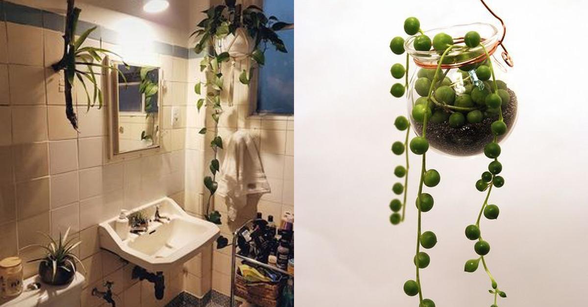 12 plantes parfaites pour la salle de bains
