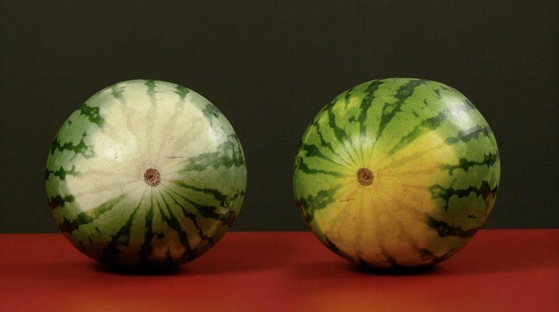 2 pastèques avec des taches de couleur différente