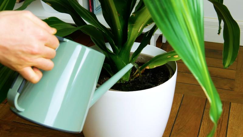 Déchets organiques utiles : 4 raisons de ne pas jeter les peaux de bananes C9ecea3094cd834563eee4c341c3ffc2-800x452
