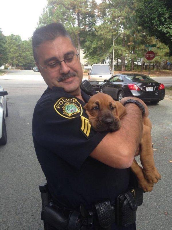 """Un chiot policier, dans les bras d'un de ses """"collègues"""" après une journée de travail"""