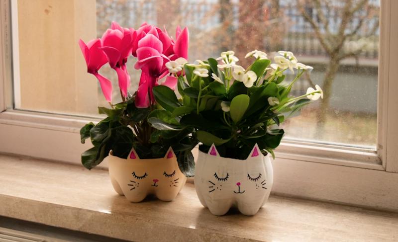 fonds des bouteilles en plastique  servant de pot de fleurs