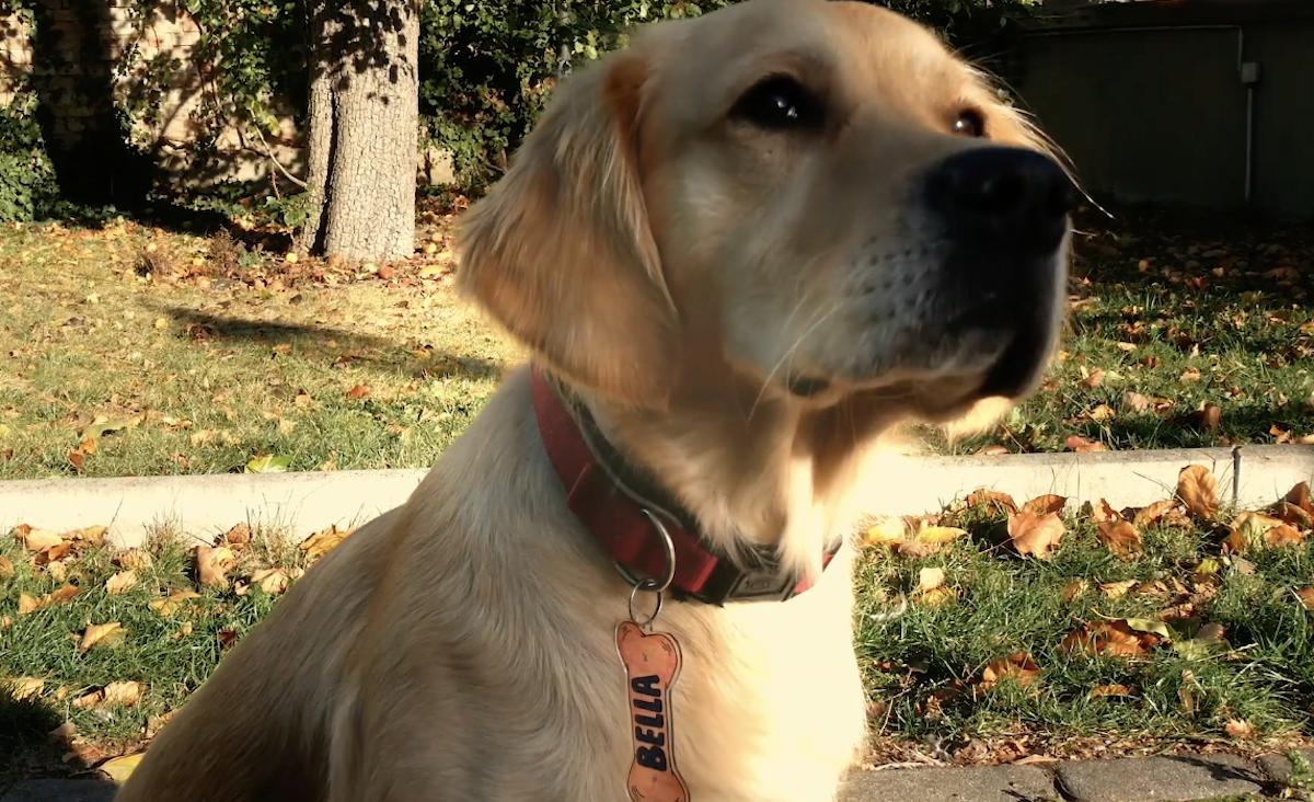 chien portant un pendentif fait maison