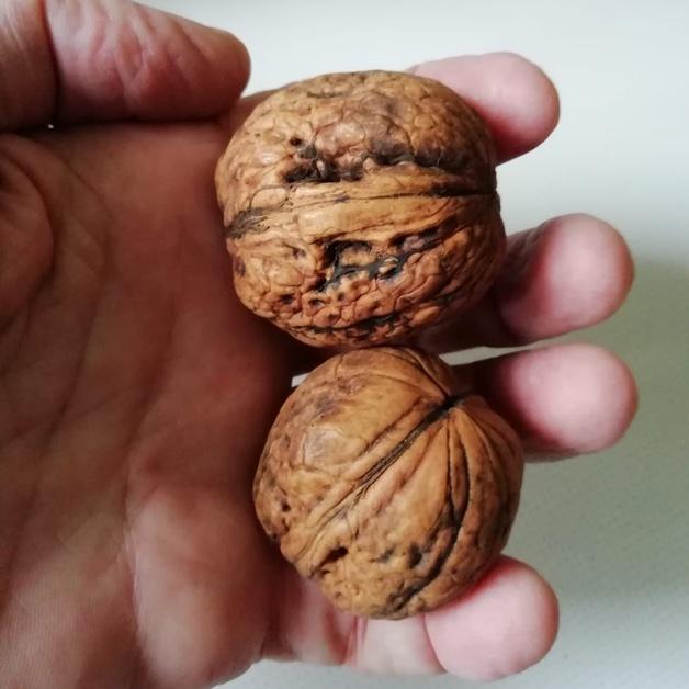 deux noix dans une main