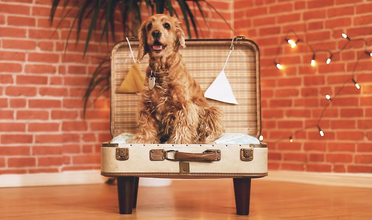 chien dans un panier fabriqué à partir d'un vieille valise