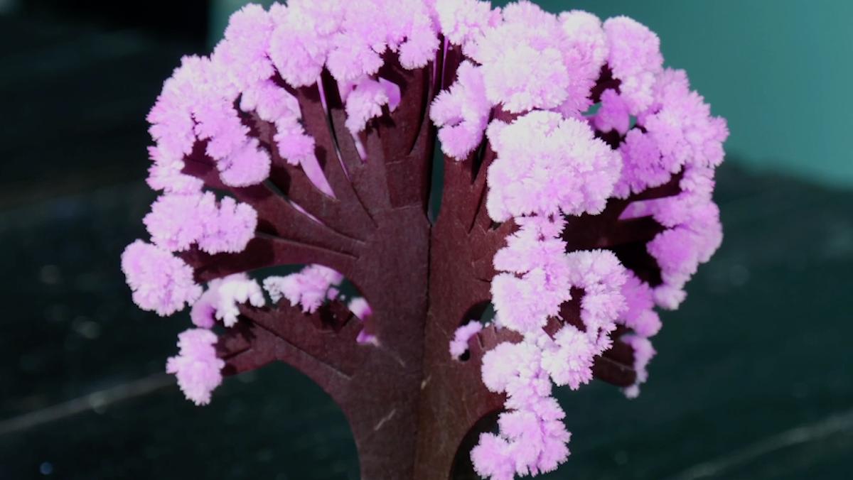 arbre qui fleurit grâce au sel