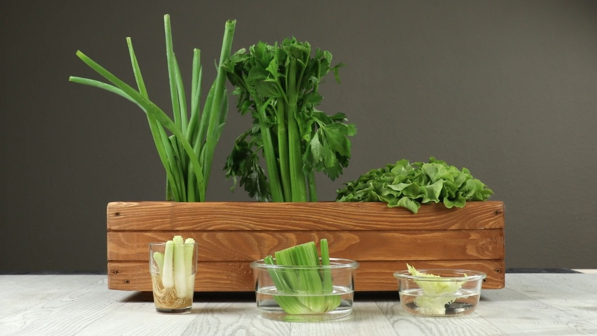 Refaire pousser des légumes frais à partir de déchets
