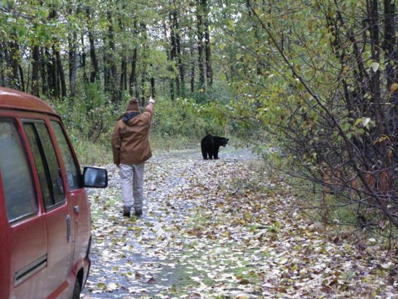papa et un ours