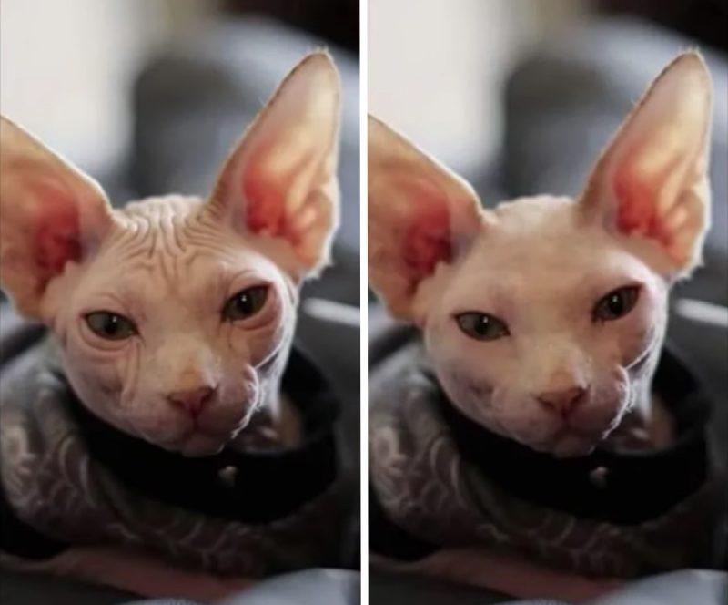 photo de chat retouchée par photoshop