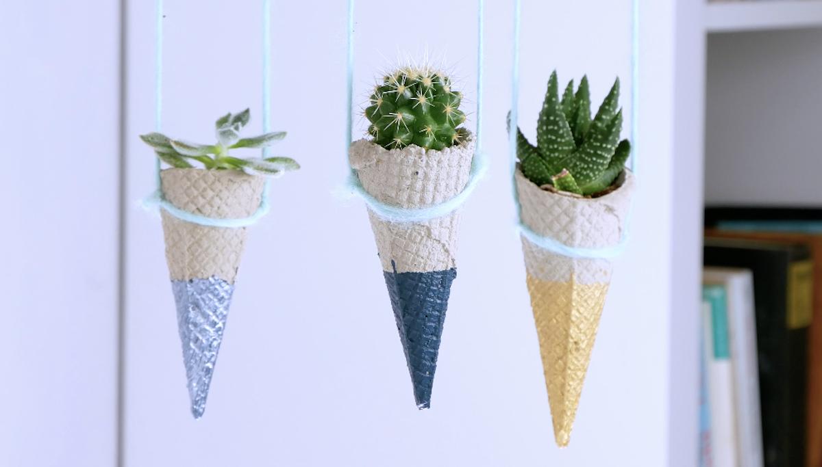 hanging cacti