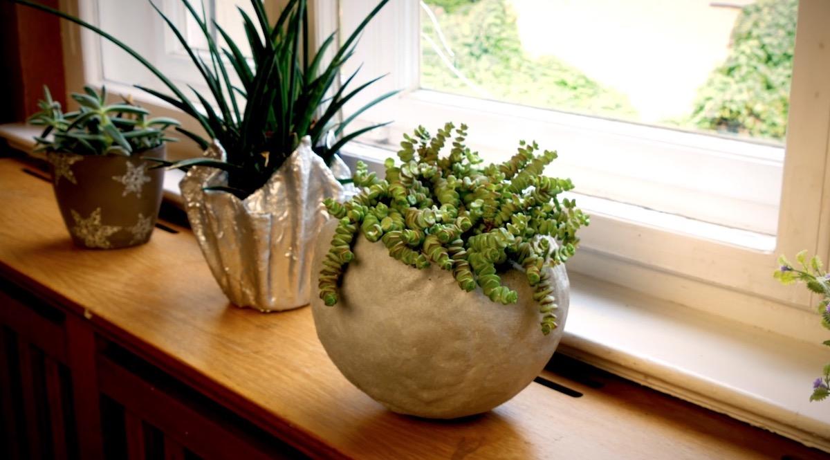 succulent plant in a cement pot