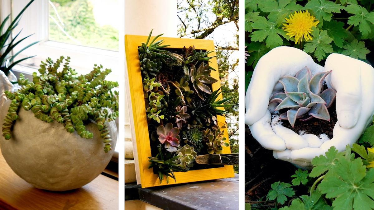 flower pots for succulents