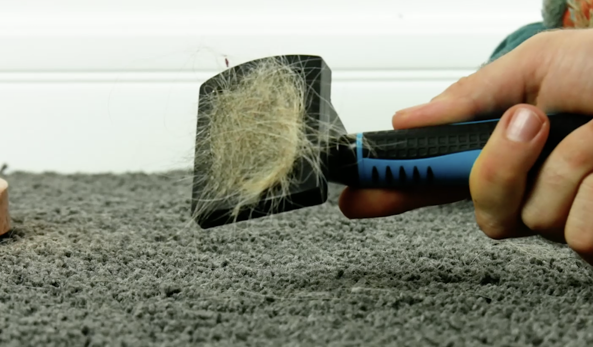 Remove animal hair from the carpet with a brush