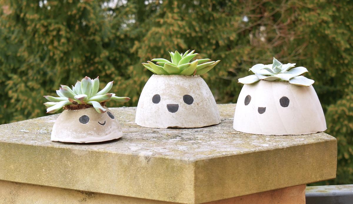 pots de plantes succulentes