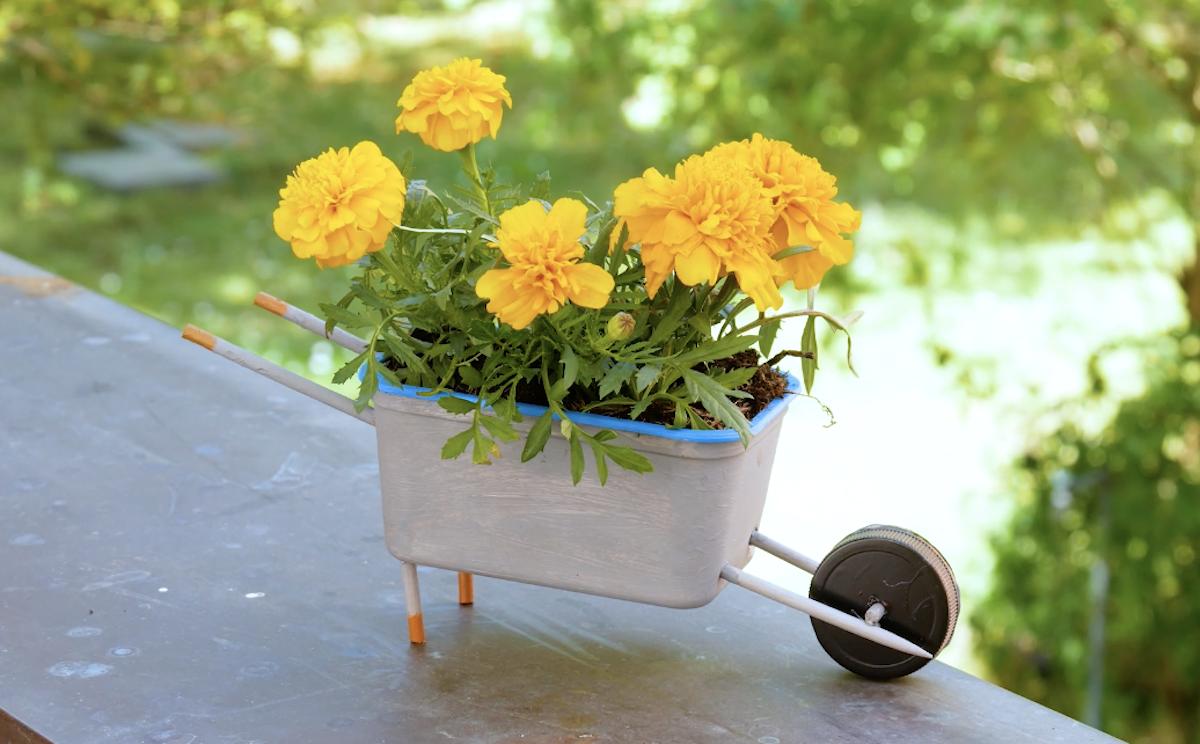 pot de fleurs en forme de brouette