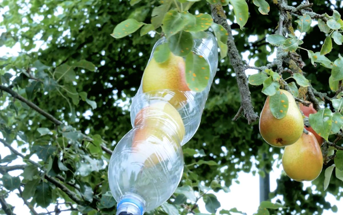 cueillir les fruits facilement
