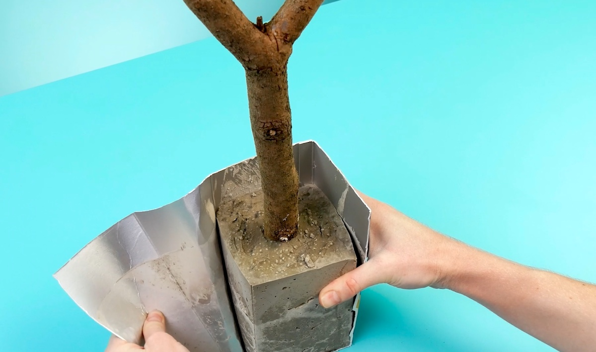 planter une branche dans du ciment