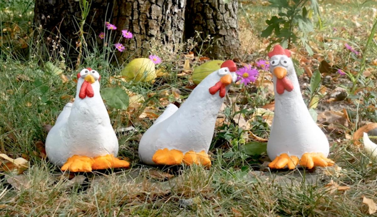 poulets de jardin